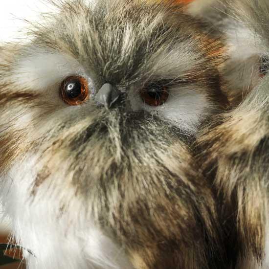 Small Fluffy Owl Friends - Birds & Butterflies - Basic ...