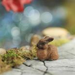Miniature Brown Rabbit