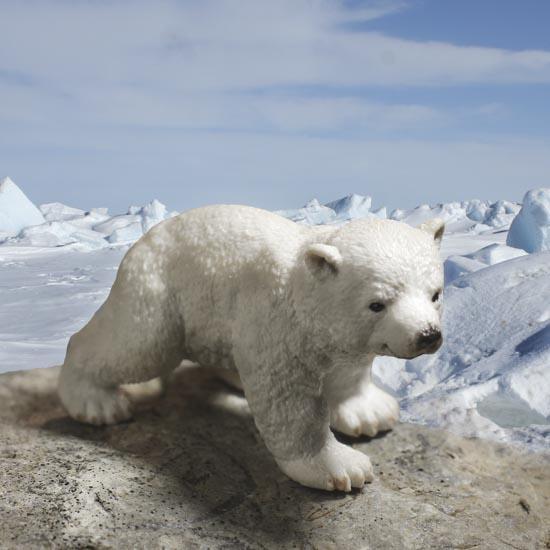 polar bear porn items view