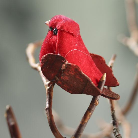 Snow Birds Male Cardinal moreover Cardinal Birdhouse Plans together with Heuchera Santa Ana Cardinal Of further Miniature Cardinal Mushroom Bird also E. on small cardinal bird