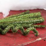 Artificial Canadian Pine Pipe Cleaners