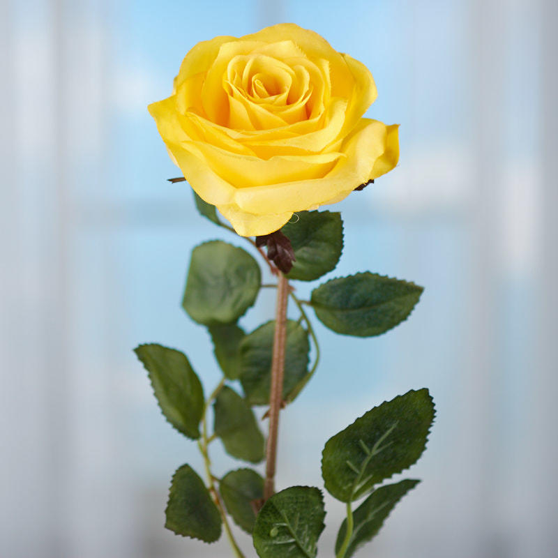 yellow rose stem - picks and stems