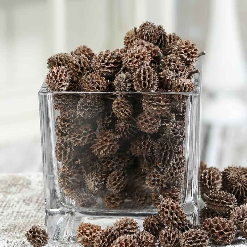 Natural dried casuarina pods drieds natural botanicals for Dried flowers craft supplies