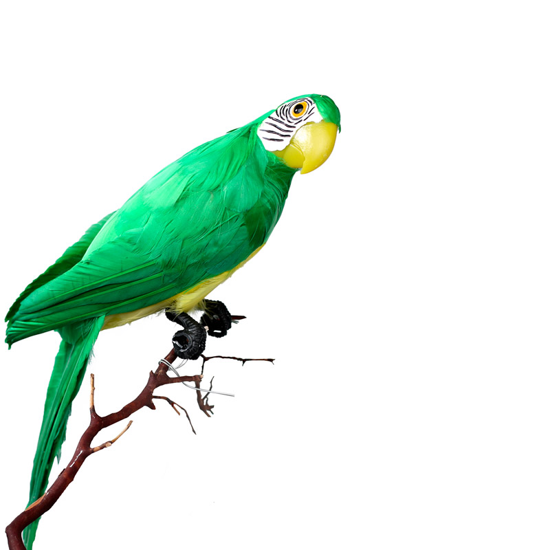 Exotic Birds For Sale >> Tropical Green Artificial Macaw Parrot - Birds ...