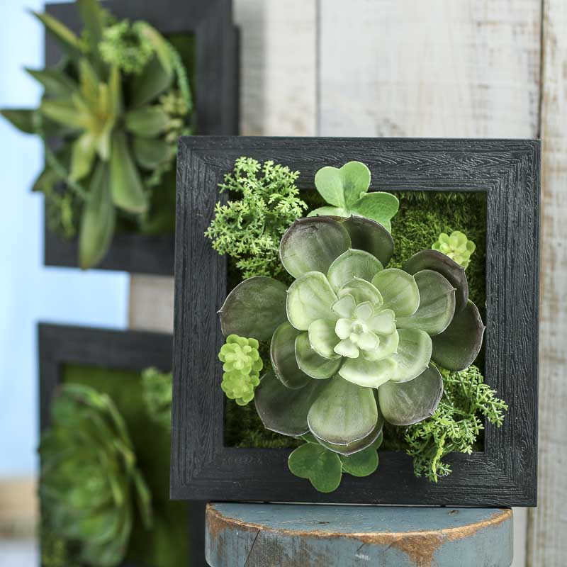 Home Decor With Succulents