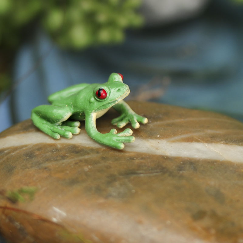 how to catch a frog with your bare hands