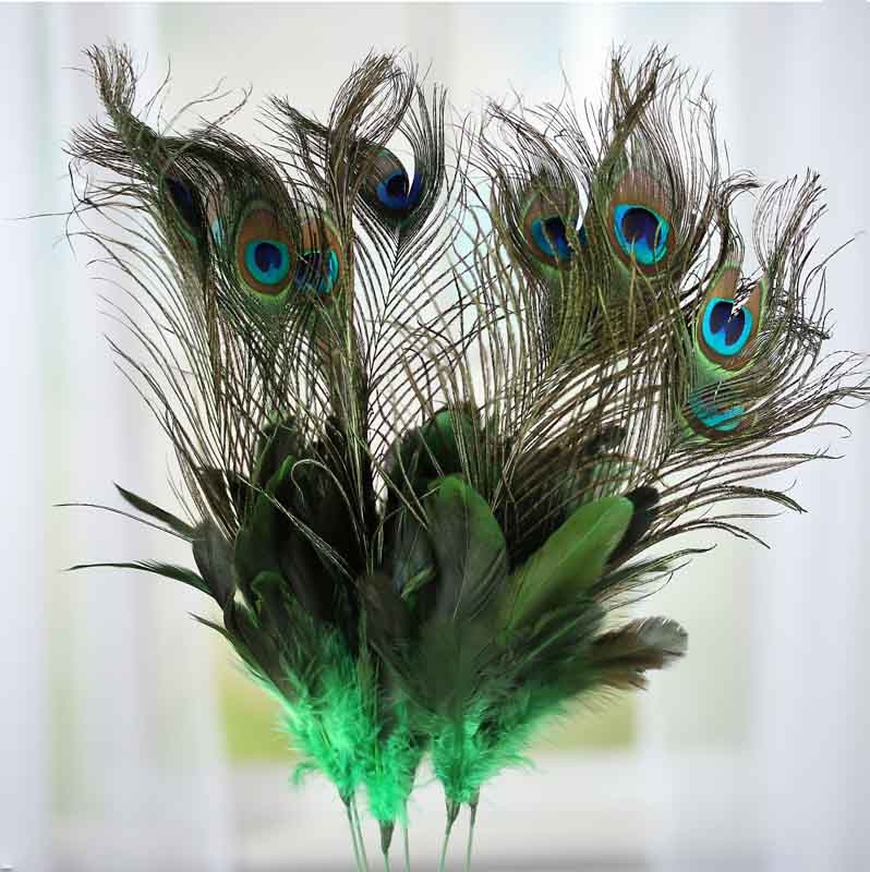 Peacock Feather Flower Stems Feathers Basic Craft