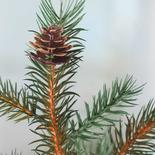 Dark Green Artificial Hemlock Pine Spray