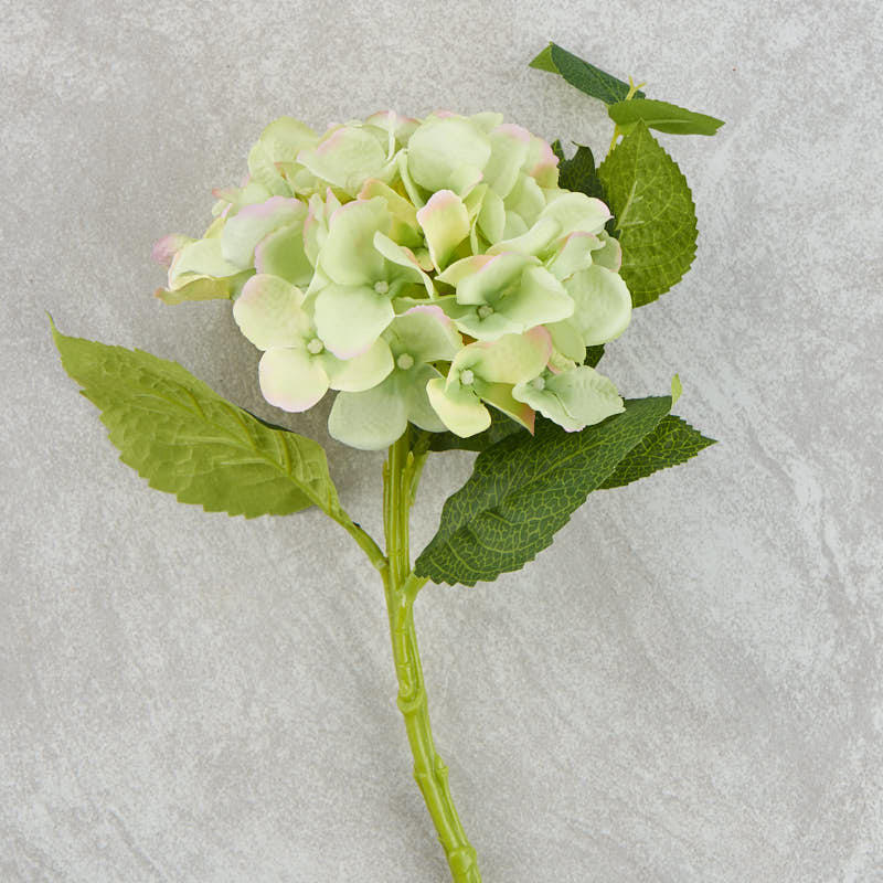 light green and pink hydrangea stem