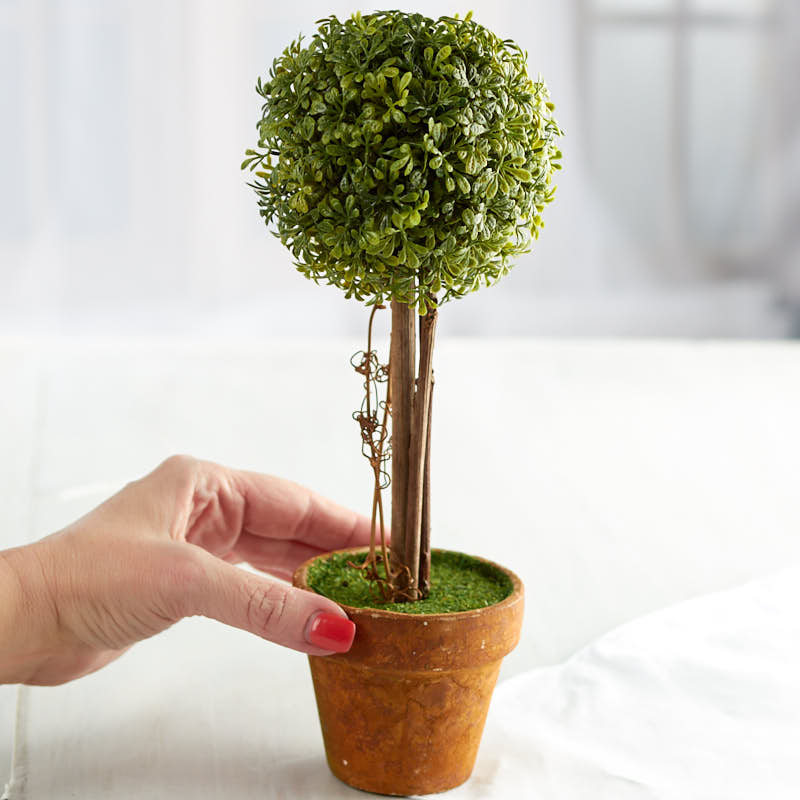 Small Boxwood Ball Topiary Plant