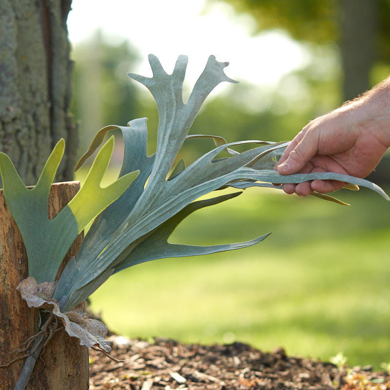 Flocked Artificial Staghorn Fern Picks And Stems