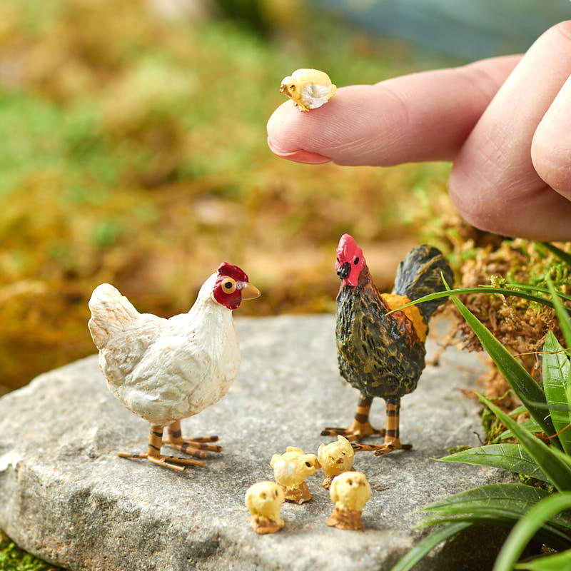 Miniature Chicks, Chicken, And Rooster