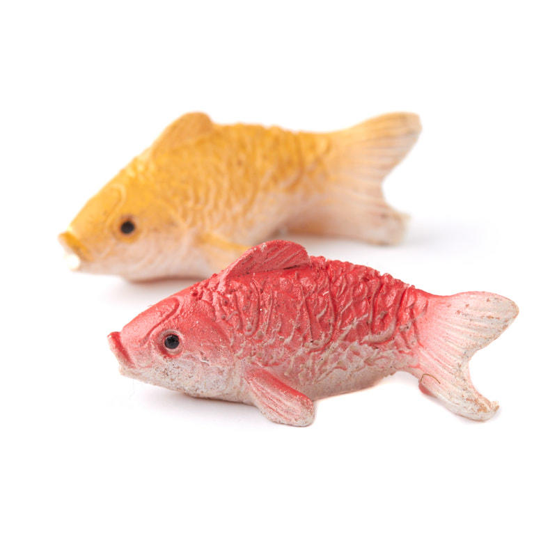 Miniature yellow and orange koi fish what 39 s new for Mini koi fish