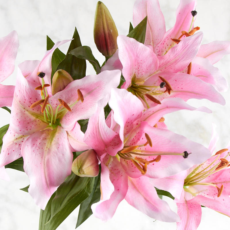 Pink Tiger Lily Bush Bushes And Bouquets Floral