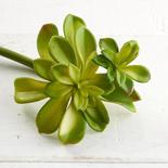 Artificial Succulent Pick