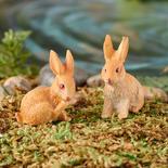 Miniature Bunny Rabbits