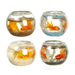 Set of Dollhouse Miniature Goldfish in Bowls