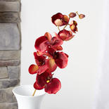 Burgundy Artificial Phalaenopsis Orchid Spray